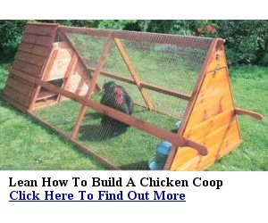 chicken sheds